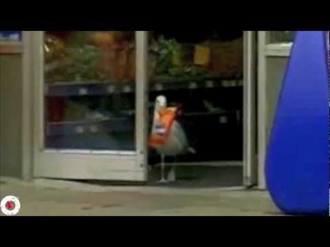 אנגרי בירדס בגרסה המציאותית - מצחיק!