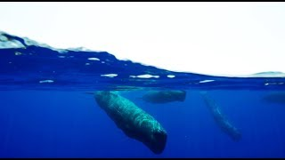 Behind the Scenes of Sperm Whale Cam | Blue Planet II |BBC Earth