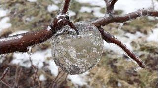 """Xuất hiện """"quả táo ma"""" tại vườn cây ở Michigan"""