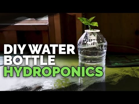 Cheap DIY Bato/Dutch Bucket Hydroponic System on Grow