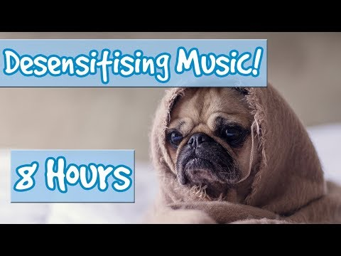 Desensitising Music! Music With Sounds To Desensitise Dogs To Noises, Comfort Dogs, Help Anxiety! 🐶