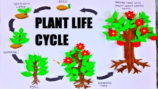 Plant Life Cycle Model For School Science Exhibition For Kids And Students