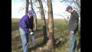 Three Methods for Controlling Trees and Brush