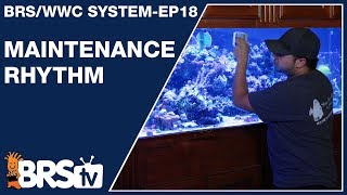 How much maintenance goes into a stable reef tank?  - The BRS/WWC System Ep18 - BRStv