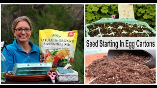 Seed Starting In Egg Cartons~Mini Greenhouse