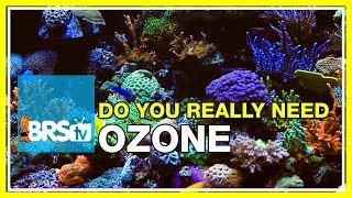Week 28: Ozone and reef tanks: Crystal clear tanks but at a cost! | 52 Weeks of Reefing #BRS160