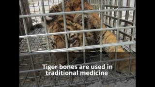 Rescue these poor animals from cruel wildlife trafficking!