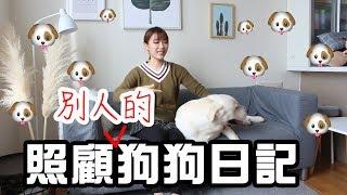 我家突然來了隻大狗🐶!! 和拉布拉多狗的兩日一夜|Ling Cheng