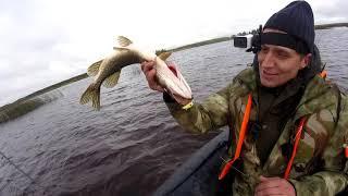 Осенняя рыбалка на спининг, ОкуНь ЩУКа РЫБИНСКОЕ ВОДОХРАНИЛИЩЕ!