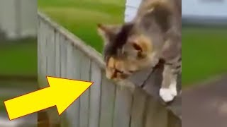 Cat Chases Down The Mailman Every Day To Make One Brazen Demand