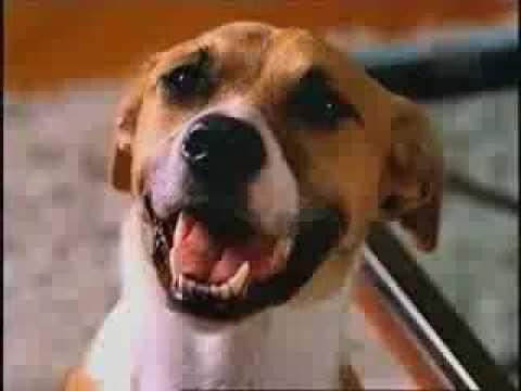 人與狗最尷尬的畫面