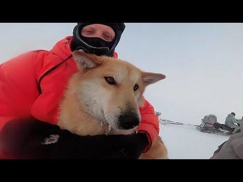 Что стало со спасенной «Военной приемкой» собакой