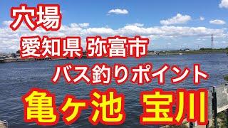亀ヶ池宝川穴場バス釣りポイント愛知県弥富市ブラックバス