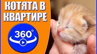 Котята в квартире. Видео 360 градусов.