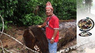Brazil's Bolsonaro Opens Up The Amazon To Exploitation