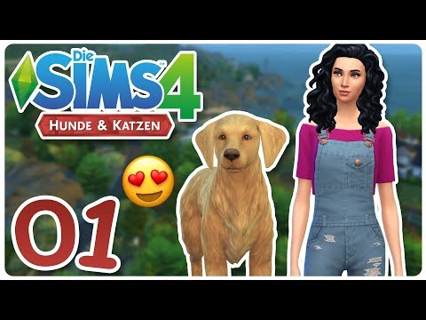 Sims Cats And Dogs Count Down