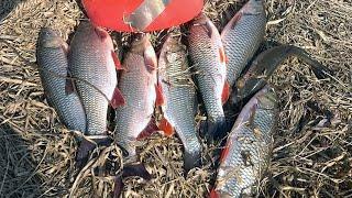 Про рыбалку на удочку весна 2020