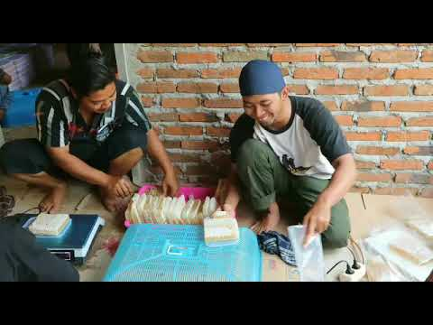 0856-4840-4735 (Bu Sofi) Yang Jual Beli Sarang Lebah Madu Hitam di Jakarta Indramayu Karawang Bogor