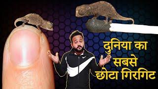 Facts in Hindi - दिमाग को हिला देने वाले Most Amazing Fact in Hindi // Latest Hindi Facts