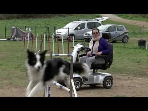 VIDÉO. Audrey Venturi et Oddy vers les mondiaux d'handi agility