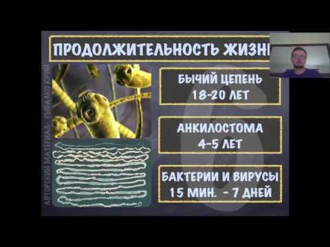Ложный опенок паразит