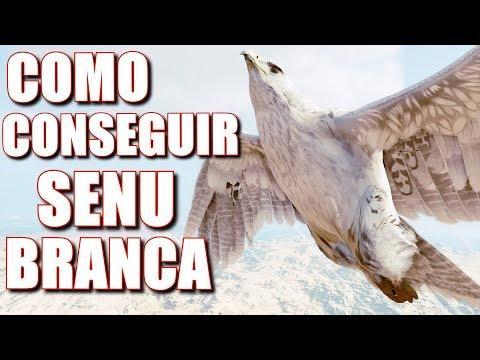 Assassin's Creed Origins: COMO CONSEGUIR SENU COM INSTINTO SUPERIOR COMPLETO : ) (ÁGUIA BRANCA)