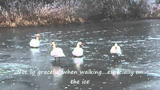 Gartmorn Dam Iced Over.wmv
