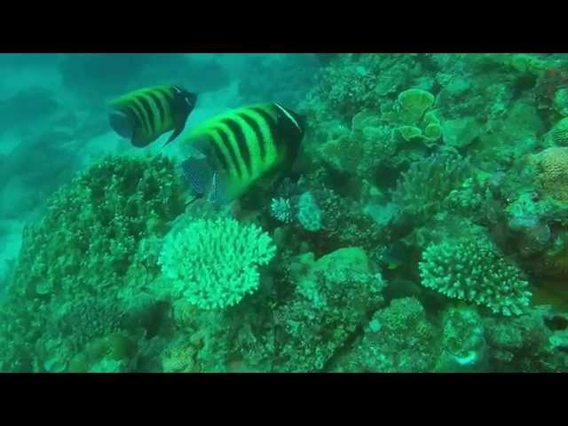 Taka Great Barrier Reef Dive Trip Highlights