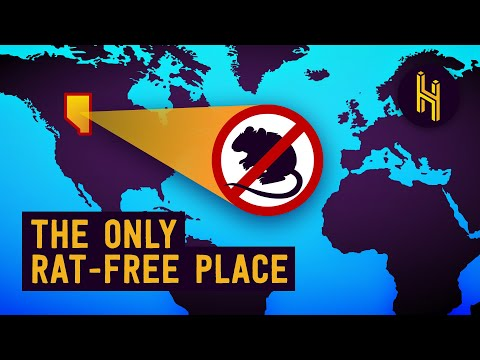 How Did Alberta Manage to Stay Rat Free?