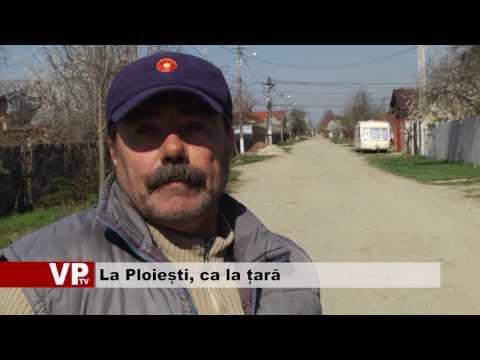 La Ploiești, ca la țară