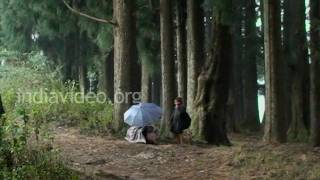 Pine forest in Shillong, Meghalaya