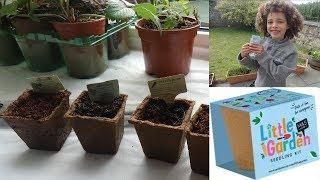 Planting M&S Little Garden Seedling Kits Fun Home School Ideas For Kids