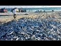 وفرة سمك السردين تكبد أصحاب مراكب الصيد خسائر كبيرة Port de Mostaganem