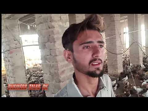 Desi Hen Farming in Pakistan|Golden Misri Farming in