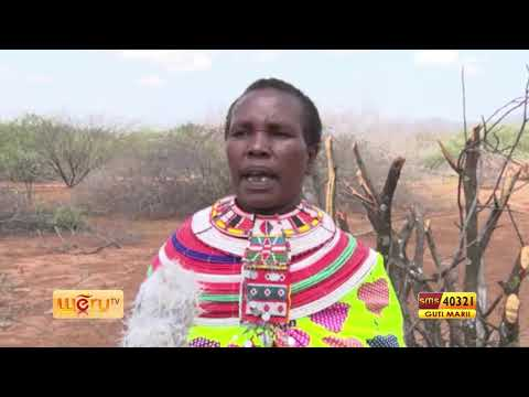 , title : 'PASTORALISTS DEVOTE TO CLEAR BUSH IN THEIR GRAZING LAND 1