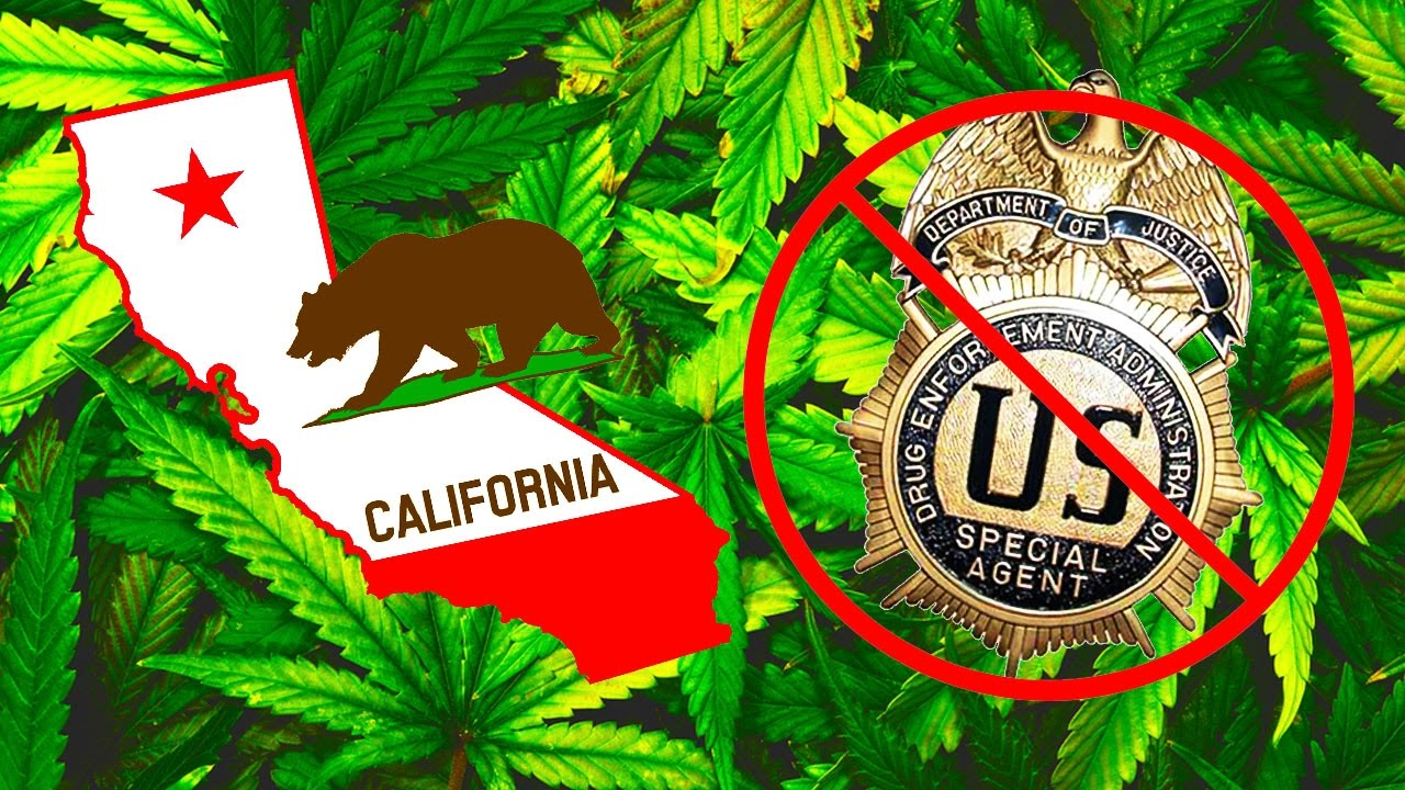 Have You Ever Seen A Sanctuary State...ON WEED!?!? thumbnail