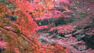 京都 嵐山の紅葉 大堰川沿いに上流へ Arashiyama in autumn, Kyoto(2011-11)