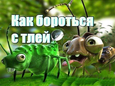 Клетчатка и паразиты