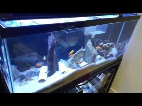 eBay 48″ LED aquarium light review cll_petsupplies