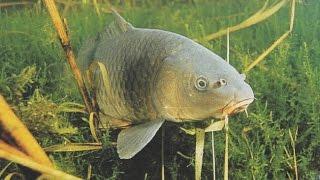 Как сделать рыболовная снасть спутник