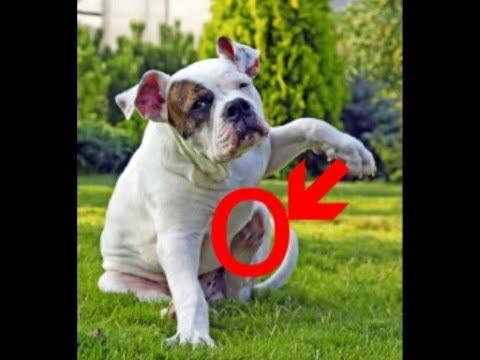 Об этом надо знать Аллергия у собак как с этим бороться ?????