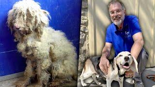El santuario de perros viejitos que te romperá el corazón