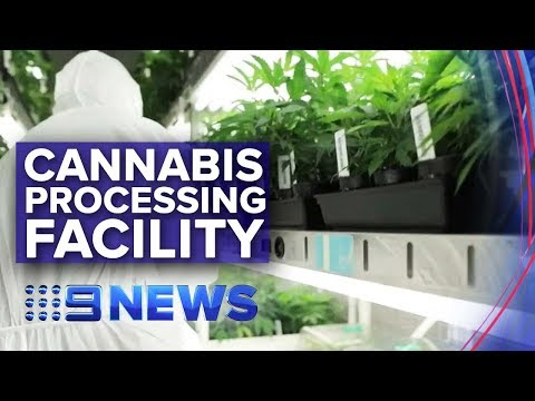 Victoria opens first medicinal cannabis processing facility | Nine News Australia