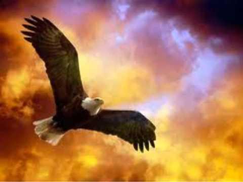 Aguila Furtiva