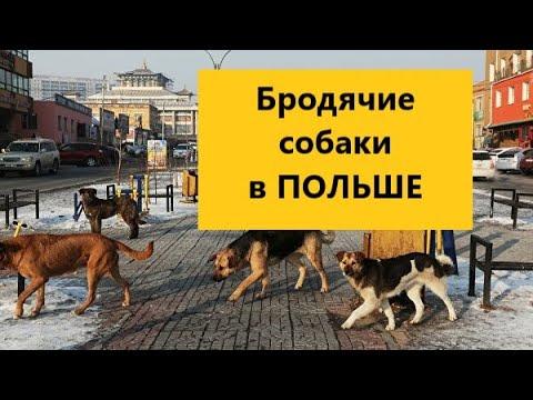 Бродячие животные в Польше в сравнение с Россией. Кошки и собаки в Польше