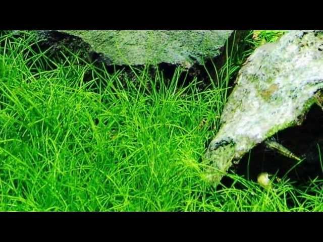 Plants For A Decorated Discus Aquarium -A