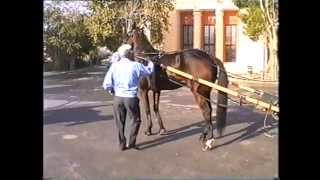 preview picture of video 'Io e zio a passeggio col calesse. Marsala (Tp)'