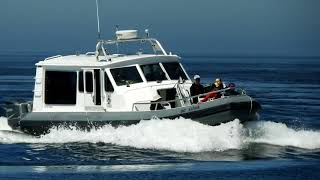 Whale Watching tour on Vancouver Island