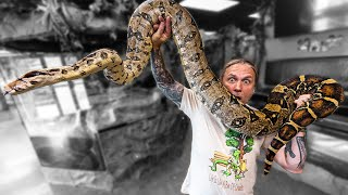 ALL MY BOAS IN ONE VIDEO!!   BRIAN BARCZYK