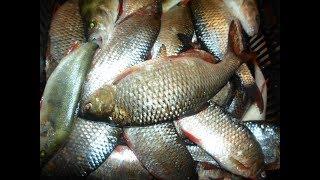 Отчет рыбалке на истринском водохранилище
